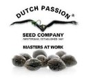 Dutch Passion Regulares